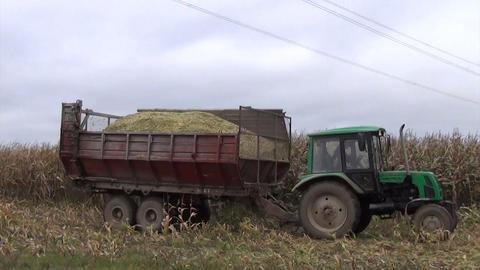 Tractor with trailer of freshly harvested ripe corn drive field Footage