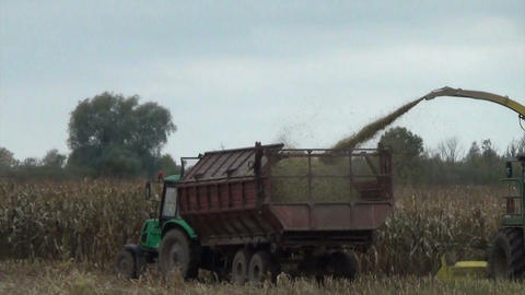 seasonal agriculture corn field harvest with industrial machine Footage