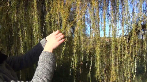 girl make the plait long thorny branches of larch autumn park Footage