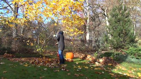 seasonal autumn garden work gardener rake leaves tulip tree Live Action