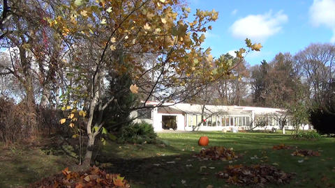 piles of rake leaves and autumn color tree branches move in yard Footage