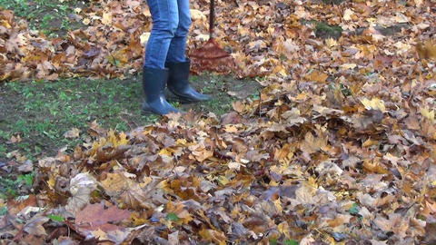 close up of gardener raking a lot of dry maple leaves Footage