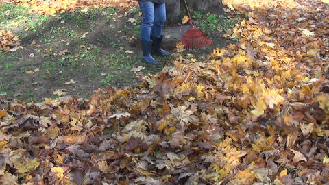 girl raking thick coat dry leaves Footage
