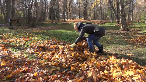 woman handles leaves in cloth bag autumn garden work Footage