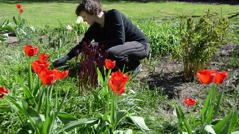 Tired gardener woman weeding flower bed in spring Live Action