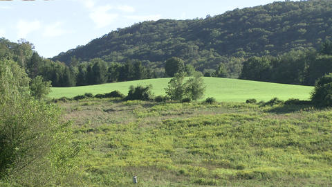Grassy area among treed hills Footage