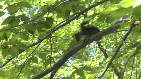 Squirrel (2 of 3) Footage
