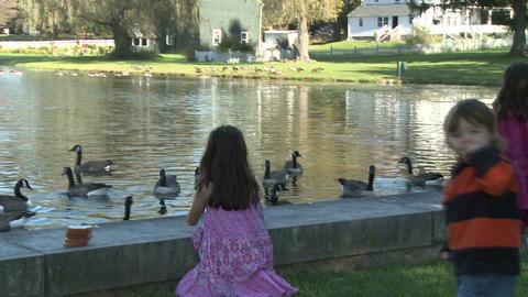Little girls feeding ducks (5 of 7) Footage