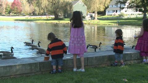 Little girls feeding ducks (4 of 7) Footage