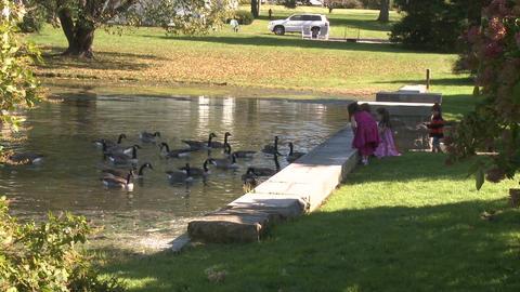 Little girls feeding ducks (2 of 7) Footage