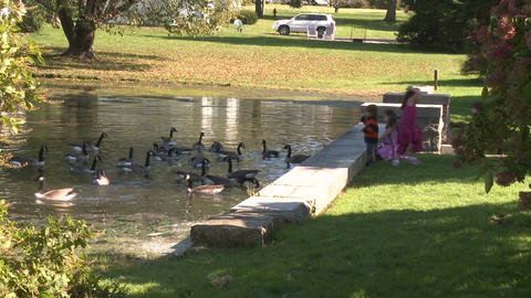 Little girls feeding ducks (1 of 7) Footage