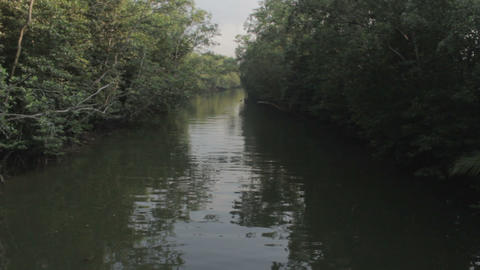 River In Jungle stock footage