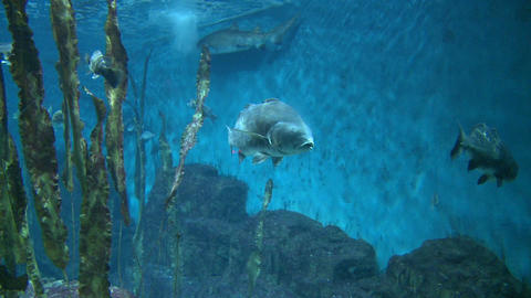 Majestic aquatic life (12 of 19) Live Action
