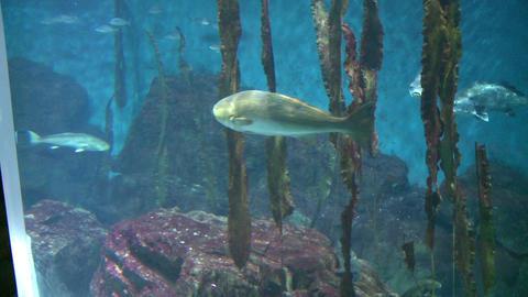 Majestic aquatic life (16 of 19) Footage