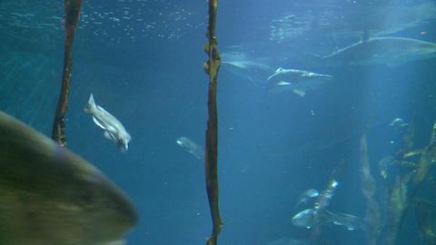 Majestic aquatic life (6 of 19) Live Action