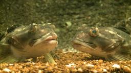 Up-close aquatic life (13 of 16) Live Action