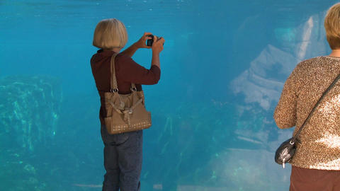 Observing a Beluga Whale (1 of 9) Footage