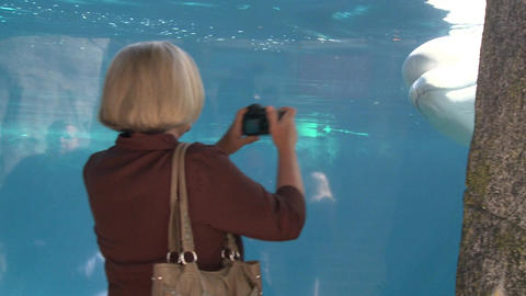 Observing a Beluga Whale (4 of 9) Footage