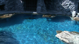 Seals swimming in an exhibit (1 of 4) Footage