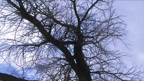 Tree And Clouds Timelapse 1 stock footage