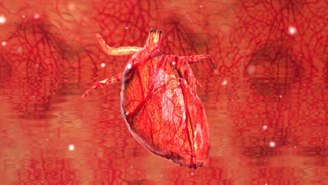 Human Heart Cardiovasculer Speed Up Beating Animation Footage