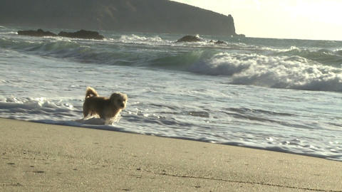 dog running away from water slow motion Stock Video Footage