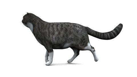歩く猫 Animation