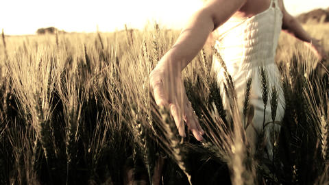 sunset Heaven Freedom hand green organic concept... Stock Video Footage
