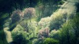 Beautiful Blossoming Springtime Trees stylized Live Action