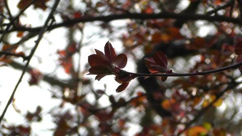 Springtime Tree 05 Stock Video Footage