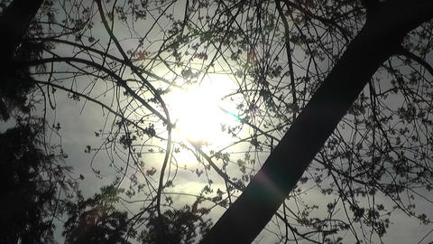 Springtime Trees against Sun Footage