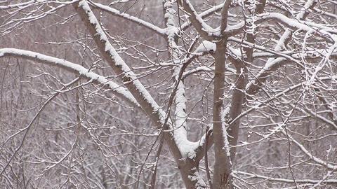 Snowfall on the tree in Mt.Hakkoda,Aomori,Japan_2 Stock Video Footage