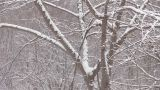 Snowfall on the tree in Mt.Hakkoda,Aomori,Japan_2 Footage
