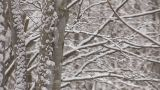 Snowfall on the tree in Mt.Hakkoda,Aomori,Japan_4 Footage