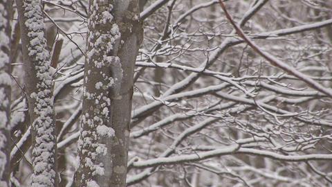 Snowfall on the tree in Mt.Hakkoda,Aomori,Japan_4 Stock Video Footage