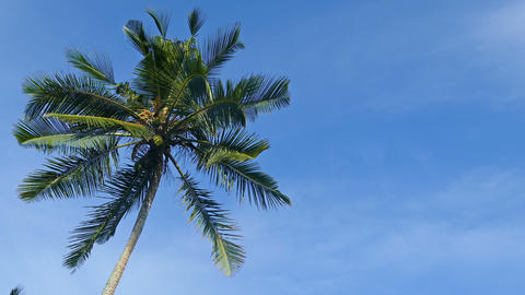 branches of coconut palm against blue sky Footage