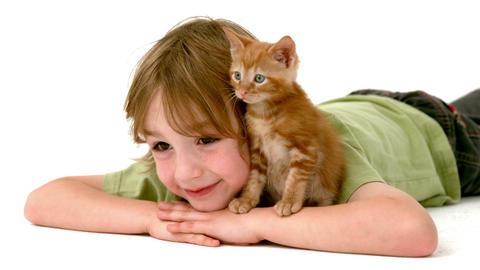 In slow motion boy with kitten Footage