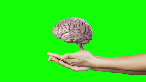 Hands presenting a spinning brain Animation