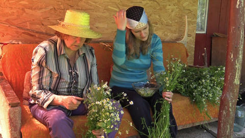 Senior grandmother and young woman pick herb chamomile blooms Footage