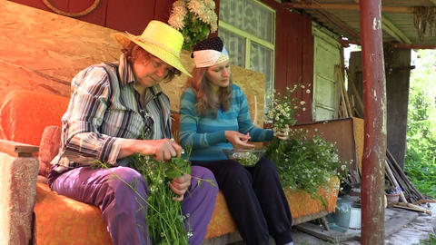 Young woman and old senior gather herbal chamomile flower Footage