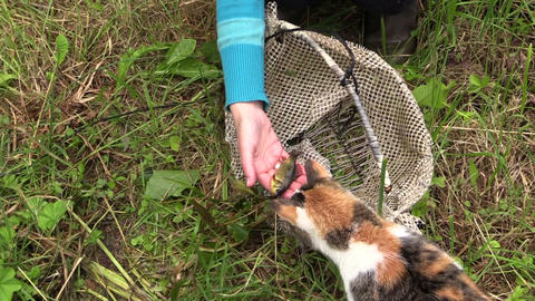 close up of hand offer cat crucian caught with mesh bag Live Action