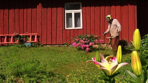 Gardener man with trimmer cut grass between flowers near house Footage