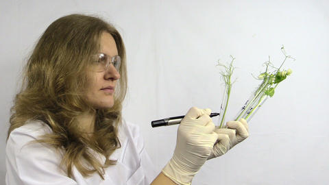 Woman With Glasses Write Numbers On Flasks With Pea Plants stock footage