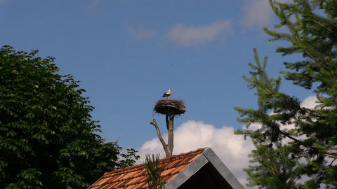 Lonely stork bird sit in nest on blue sky background Footage