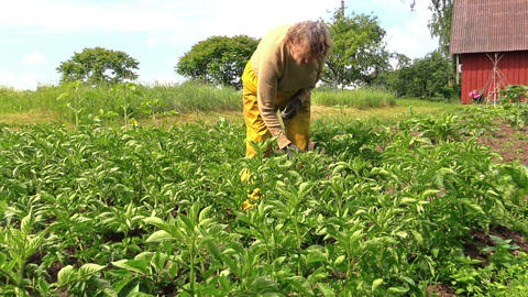 grandma examine potato harvest branch in country garden Footage