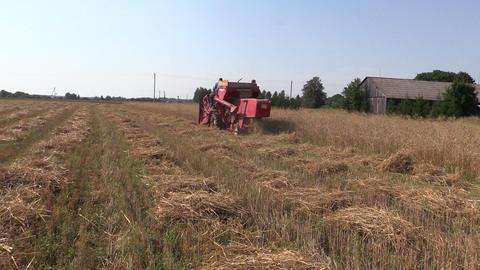 harvester work barley corn field. Activities rural countryside Footage
