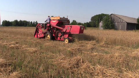 Farmer worker harvesting wheat plants with red combine harvester Footage