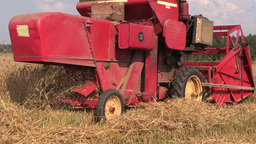 close up harvester threshing in barley field. Rural activities Footage