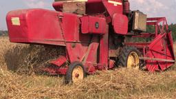 close up harvester threshing in barley field. Rural activities Footage