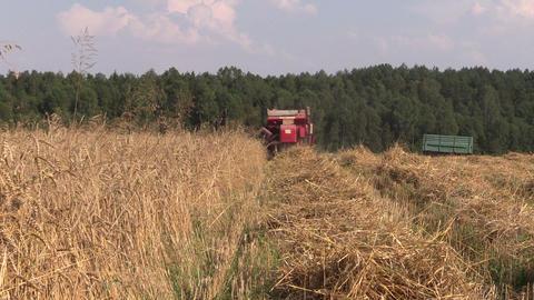 Back of combine harvester cut ripe wheat grain field Footage
